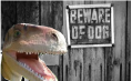 beware of raptor