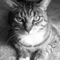 asshole cat scott howard vincent nuclearchainsaw utah