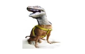chihuahuasaurus