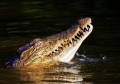 1400995_nile_crocodile_4